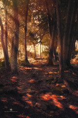 (Rebecca812) Tags: forest wisconsin sunlight beauty nature rebecca812 canon canon5dmarkii doorcounty cavepointcountypark ethereal atmospheric woods