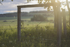 golden hour (rockinmonique) Tags: fence goldenhour country bucolic sunset green trees feild moniquew canon tamron copyright2016moniquewphotography