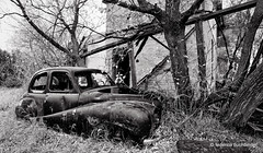 Her name is Austin (/ shadows and light) Tags: 1954austin lyonsmanor carberry manitoba abandoned beaters cars decay decayed derelict bw monochrome trixgrain old ruralexploration rurex rustbuckets textures vehicles trees walls grass