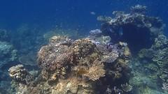 DJIBOUTI (60 of 88) (GregoireDubois) Tags: djibouti nature sea diving wildlife corals