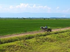 Bulgaria and slopes of Rhodope Mountains (franz_brocchi) Tags: bulgaria  railtrack chariot horse bucolic green fujix20 fujifilmxseries  rodopi rhodope