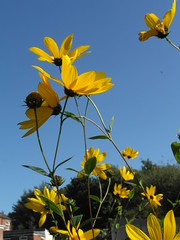 Reaching for the sky! (bryanilona) Tags: flowers garden citrit fantasticflowers exceptionalflowers