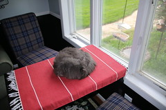 98/365/3020 (September 17, 2016) - Another Busy Weekend with Wanda the Cat (cseeman) Tags: wanda cats pets saline michigan relaxing 2016project365coreys yearnineproject365coreys project365 p365cs092016 356project2016