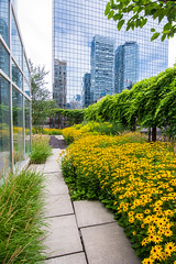 Bright Lights (Viv Lynch) Tags: toronto nativechildandfamilyservices downtown urban city greenroof garden sacred design wildflowers plants botany ecology culture beautiful ontario canada firstnations collegestreet peace