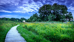 Close to home (Light1Scene) Tags: bluehour bathouse landscape walking path green purple blue wood yellow white trees scatter clouds canada