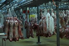 Rungis - March des viandes (marie-adeline.rothenburger) Tags: rungis march viande boucherie cochons
