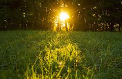 Evening Photons (Matt Champlin) Tags: summer summertime evening peace peaceful calm green lush home sunset canon 2016 nature hope forwardwego