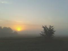 Lever  de soleil (sosivov) Tags: sweden skne sunrise foggy landscape