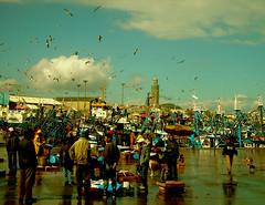 KIF_2488 (egonos) Tags: marokko casablanca