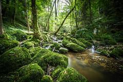 Chastelbachtal (UpuautX) Tags: chastelbach baselland chastelbachtal grellingen wasser bach jungle dschungel grün
