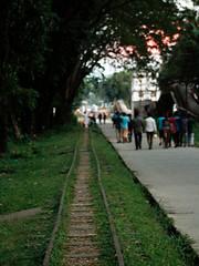 _MG_3874-1 (mohammed_apu) Tags: train green tree street sylhet chatok
