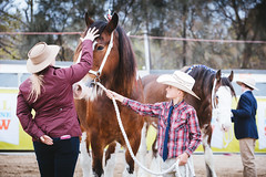 Royal Melbourne Show 2016 (tyroga) Tags: clydesdale horse juniors leading jamestroi tyroga royalmelbourneshow