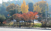 Autumn in Wonju (avricha_) Tags: korea wonju