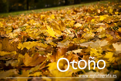 Otoo (MaryChaco) Tags: leaves yellow hojas colours autum herbst banco amarillo gelb otoo bltter palabras