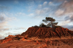 the Torrey pine (Andy Kennelly) Tags: california light moon tree beach pine clouds sand san shadows roots diego erosion formation drought root torrey