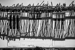 azebrau (FJTUrban (sommelier d mojitos)) Tags: door shadow bw white house black blanco mono casa puerta noiretblanc negro sombra bn zebra blancoynegroblackandwhite