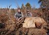 New Mexico Elk Hunt 52