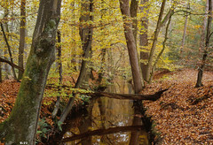 Leuvenumse beek (U-77) Tags: autumn trees creek forest automne woodland countryside woods woodlands mood beek kodak herbst herfst brook streams bos wald outono veluwe oldtrees nikonf5 kodake100g leuvenhorst leuvenum beekjes dehierdensebeek nikon50mmf14g leuvenumsebeek forestscapes dehierdenschebeek helderbeekje