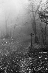 Misty Path (CoolMcFlash) Tags: wood autumn trees blackandwhite bw white mist black nature leaves misty fog mystery forest canon eos austria sterreich mood nebel path laub herbst natur foggy nobody sw signpost tamron ste wald bume schwarz stimmung weg mystisch pfad directionsign wegweiser weis nebelig herbstlich brunches niemand 18270 60d b008
