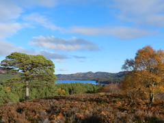 Glen Affric, 1st November 2012 (allanmaciver) Tags: november blue autumn trees sky clouds scenery view joy shades glen delight remote lonely variety loch 2012 affric admire clours allanmaciver