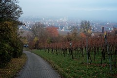 _DSF2755 - 2012-11-13 um 09-46-57 (WN Knipser) Tags: nebel laub herbst kappelberg fellbach weinberge leicaobjektiv fujifilmxe1