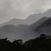 Morning Mist, Landsborough River, West Coast, New Zealand