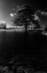 Dark waters (Skink74) Tags: uk england blackandwhite black blur tree film water pool grass pine 35mm dark ir puddle wind hampshire infrared ripples a1 135 rodinal canona1 newforest efke r72 standdevelopment ocknellplain ir820 canonfd20f28 canonfd20mm128 a1m016 filmdev:recipe=8272
