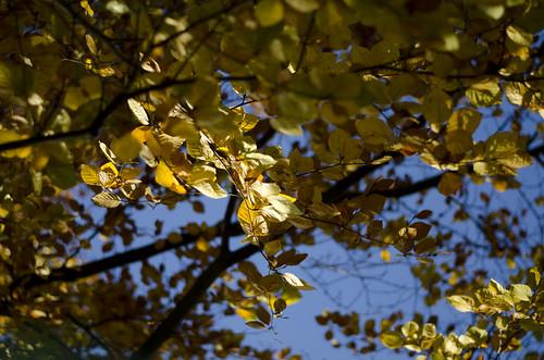 Leaves ©  Still ePsiLoN