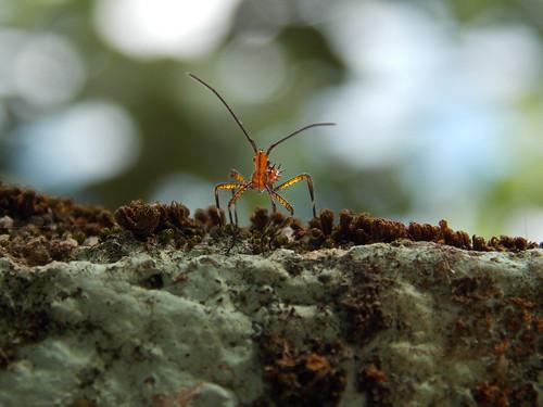 Insect (Rafael Fernandes Sant'Anna) macro animal insect nikon coolpix l810