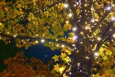 lights (turntable00000) Tags: autumn light yellow japan night photography tokyo leaf sony stock illumination 365 moment   gettyimages takashi marunouchi nex  366 kitajima turntable00000