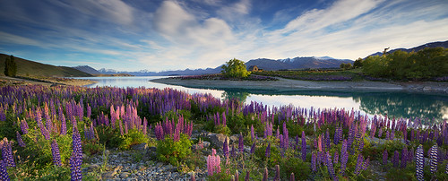 "Classic Tekapo • <a style=""font-size:0.8em;"" href=""http://www.flickr.com/photos/45056616@N00/8215191869/"" target=""_blank"">View on Flickr</a>"