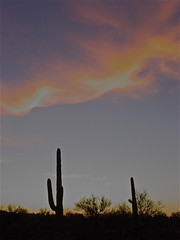 touched by the fading light (desert native) Tags: sunset arizona cactus southwest silhouette clouds desert tucson july az saguaro sonorandesert paloverde desertlandscape 2012 desertsunset arizonadesert desertclouds carnegieagigantea tucsonmountains arizonasunset deserttree july2012 milagroland milagrocohousing milagro2012