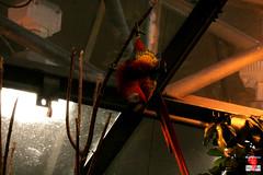 Biodme 2012 C20121125 020 (fotoproze) Tags: canada animals tiere quebec montreal animales animaux animais dieren  animali animale   2012 dyr elimet animaliak djur  anifeiliaid  hayvanlar zvata dr montrealbiodome llatok  hewan haiwan ivotinje zvierat  biodmedemontral  ivali ngvt  zwierzt   ainmhithe