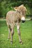 Donkey (Mejalin) Tags: beautiful wonderful nikon donkey åsna nikond90