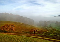 TheFarmersTracks (BphotoR) Tags: november autumn sky sun fog forest nebel hessen herbst tracks spuren himmel wald appletrees somme odenwald naturesfinest glle apfelbume abigfave weschnitztal bphotor