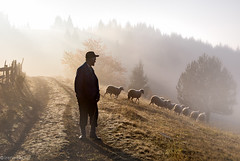 Shepherd (Irene Becker) Tags: morning autumn light sun fall nature sunrise fence landscape countryside sheep shepherd serbia autumnleaves autumnfog coban srbija stado ovce taramountain srpskoselo zaovinskojezero centralserbia centralnasrbija bestcapturesaoi zaovinelake taraplanina заовинскојезеро taranacionalnipark заовине novavezanja