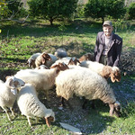 "Ahmet tending to his sheep <a style=""margin-left:10px; font-size:0.8em;"" href=""http://www.flickr.com/photos/59134591@N00/8247818384/"" target=""_blank"">@flickr</a>"