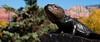 Sedona, AZ (nycckynyc) Tags: arizona sculpture brown animal animals statue sedona az bluesky lizard redrocks tamron processed a330 familytime sedonaaz