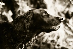 Benny (odararod) Tags: dog pets black dogs nature beautiful dark puppy photography photo photos beautifulshot sonyalpha