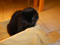 DSCN3089 (Ottmar H.) Tags: cat chat gato katze macska  kater  tomcat