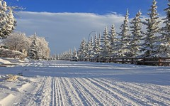 winter road (Una S) Tags: road city blue trees winter sky snow canada calgary pine day snowy wide sunny alberta