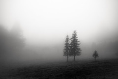 to leave my thoughts behind (Super G) Tags: trees blackandwhite bw rain fog three still quiet peaceful bwart iseemtobestuckinafogasoflate