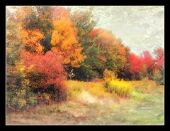 Unmowed (edenseekr) Tags: autumn countryside natural meadow foliage habitat