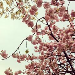 (Ogipix) Tags: pink flower nature   osaka