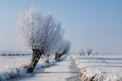 Winter Willow (BraCom (Bram)) Tags: winter mist snow holland ice fog barn canon weide ditch sneeuw nederland thenetherlands meadow willow kinderdijk ripe sloot ijs zuidholland wilgen rijp schuurtje canoneos5d canonef24105mmf4lisusm coth5 bracom ruby15 ruby20 bramvanbroekhoven