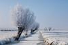 Winter Willow (BraCom (Bram)) Tags: winter mist snow holland ice fog barn canon weide ditch sneeuw nederland thenetherlands meadow willow kinderdijk ripe sloot ijs zuidholland wilgen rijp schuurtje canoneos5d canonef24105mmf4lisusm coth5 bracom ruby15 ruby20 bramvanbroekhoven