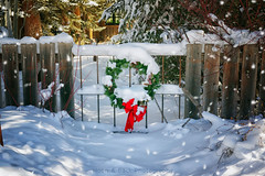 Christmas In The Mountains (Aspenbreeze) Tags: christmas holiday snow mountains fence gate colorado wreath rockymountains snowing christmaswreath thegalaxy winterinthemountains aspenbreeze gpsetest bevzuerlein