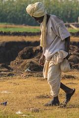 Going to work (Vijay Sonar) Tags: old morning travel portrait man grass portraits photography goingtowork bhigwan morningview rurallife bhigvan ujni indiatraditionaldressing