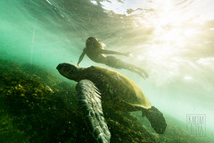 The Turtle King (Karim Iliya Photography) Tags: ocean sun wet water coral swimming swim canon person photography hawaii king afternoon underwater floor pacific feeding turtle floating maui case 5d float karim iliya mkiii hookipa ikelite