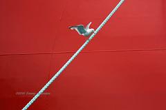 Taking off (tommyajohansson) Tags: greatbritain red rot geotagged rouge scotland rojo aberdeenshire unitedkingdom harbour gull rope aberdeen seabird weekendbreak aberdeenharbour rd kittiwake citybreak tommyajohansson